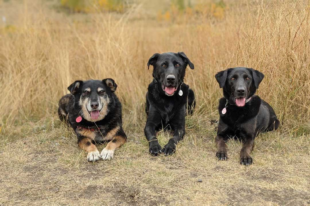 Photo of Cathryn Hanssen's three dogs.